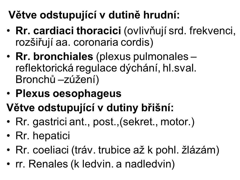 Větve odstupující v dutině hrudní: Rr. cardiaci thoracici (ovlivňují srd. frekvenci, rozšiřují aa. coronaria cordis) Rr. bronchiales (plexus pulmonale