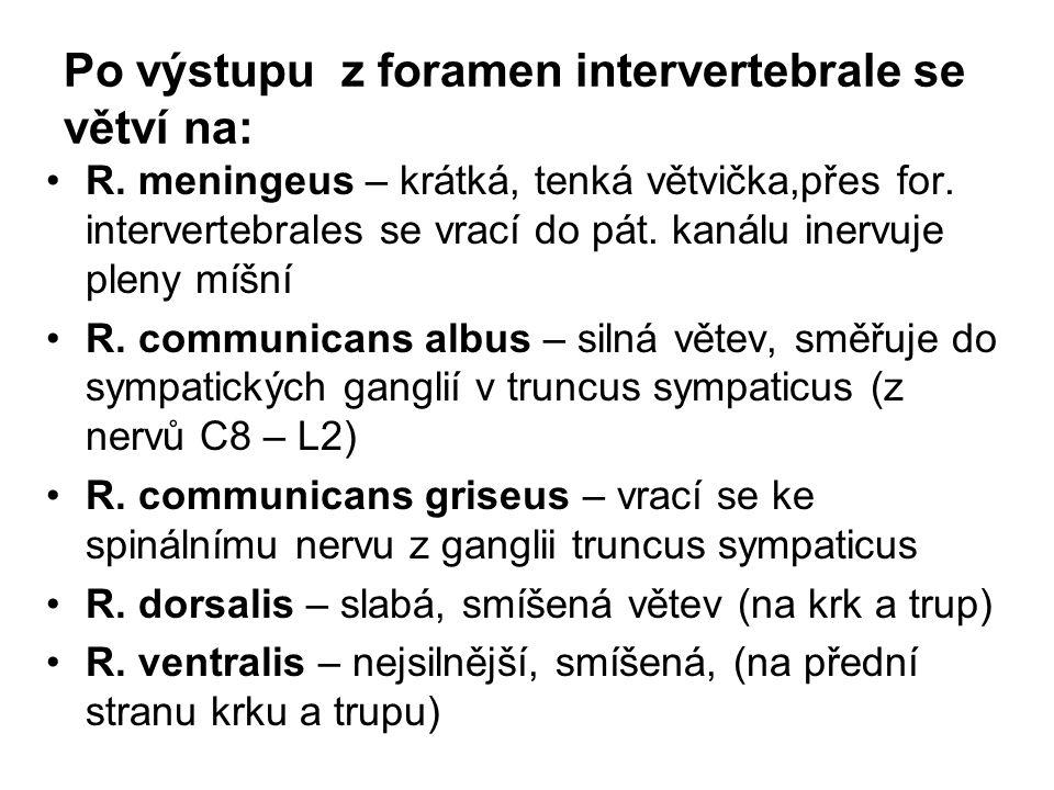 Po výstupu z foramen intervertebrale se větví na: R. meningeus – krátká, tenká větvička,přes for. intervertebrales se vrací do pát. kanálu inervuje pl