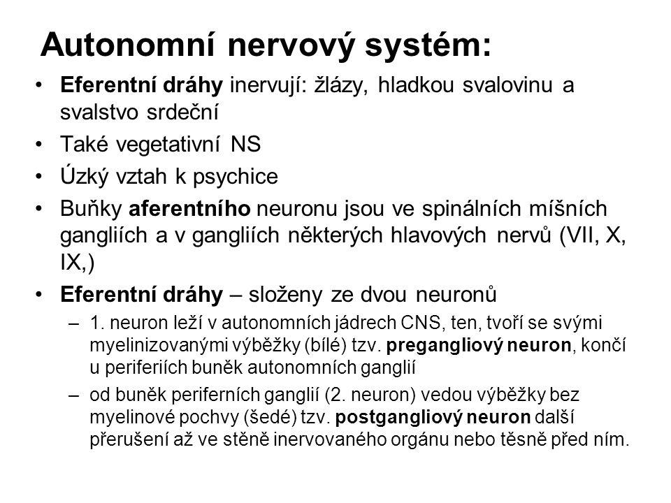 Autonomní nervový systém: Eferentní dráhy inervují: žlázy, hladkou svalovinu a svalstvo srdeční Také vegetativní NS Úzký vztah k psychice Buňky aferen
