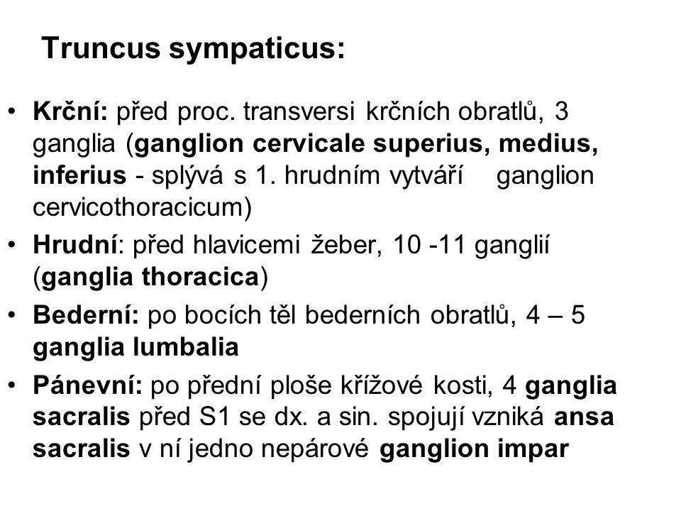 Truncus sympaticus: Krční: před proc. transversi krčních obratlů, 3 ganglia (ganglion cervicale superius, medius, inferius - splývá s 1. hrudním vytvá