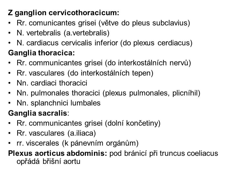 Z ganglion cervicothoracicum: Rr. comunicantes grisei (větve do pleus subclavius) N. vertebralis (a.vertebralis) N. cardiacus cervicalis inferior (do