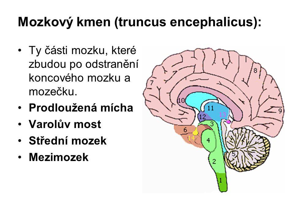 Mozkový kmen (truncus encephalicus): Ty části mozku, které zbudou po odstranění koncového mozku a mozečku. Prodloužená mícha Varolův most Střední moze