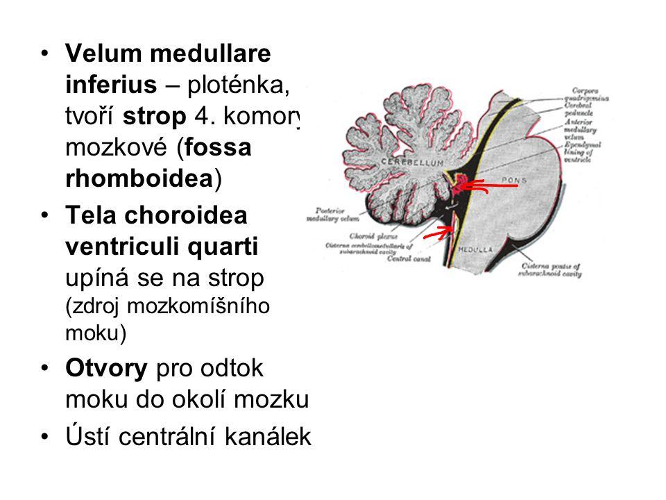 Velum medullare inferius – ploténka, tvoří strop 4. komory mozkové (fossa rhomboidea) Tela choroidea ventriculi quarti upíná se na strop (zdroj mozkom