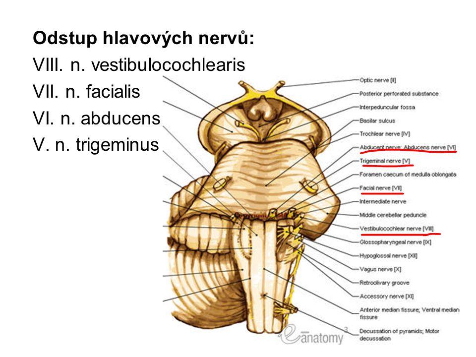 Odstup hlavových nervů: VIII. n. vestibulocochlearis VII. n. facialis VI. n. abducens V. n. trigeminus