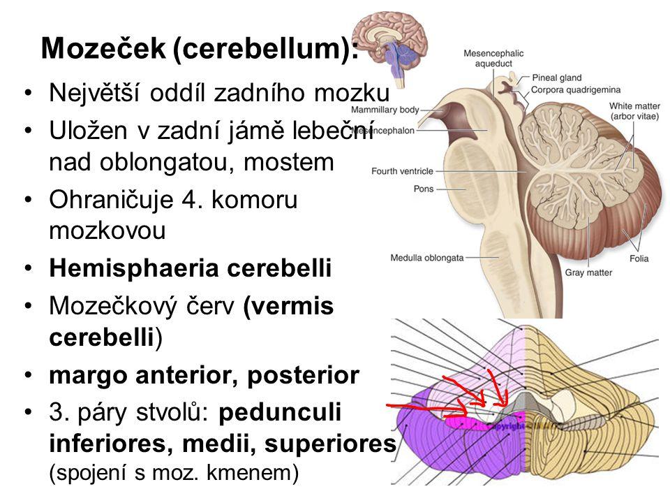 Mozeček (cerebellum): Největší oddíl zadního mozku Uložen v zadní jámě lebeční nad oblongatou, mostem Ohraničuje 4. komoru mozkovou Hemisphaeria cereb