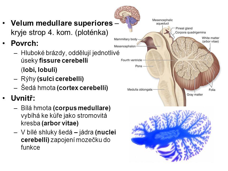 Velum medullare superiores – kryje strop 4. kom. (ploténka) Povrch: –Hluboké brázdy, oddělují jednotlivé úseky fissure cerebelli (lobi, lobuli) –Rýhy