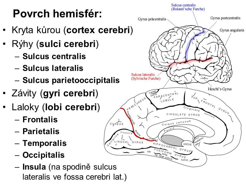 Povrch hemisfér: Kryta kůrou (cortex cerebri) Rýhy (sulci cerebri) –Sulcus centralis –Sulcus lateralis –Sulcus parietooccipitalis Závity (gyri cerebri