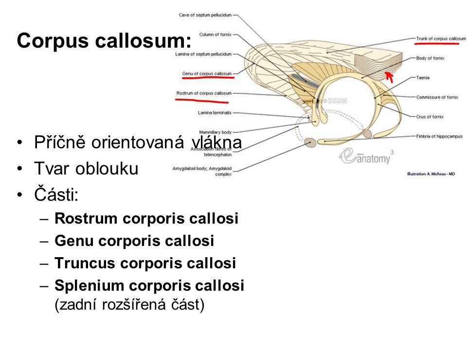 Corpus callosum: Příčně orientovaná vlákna Tvar oblouku Části: –Rostrum corporis callosi –Genu corporis callosi –Truncus corporis callosi –Splenium co