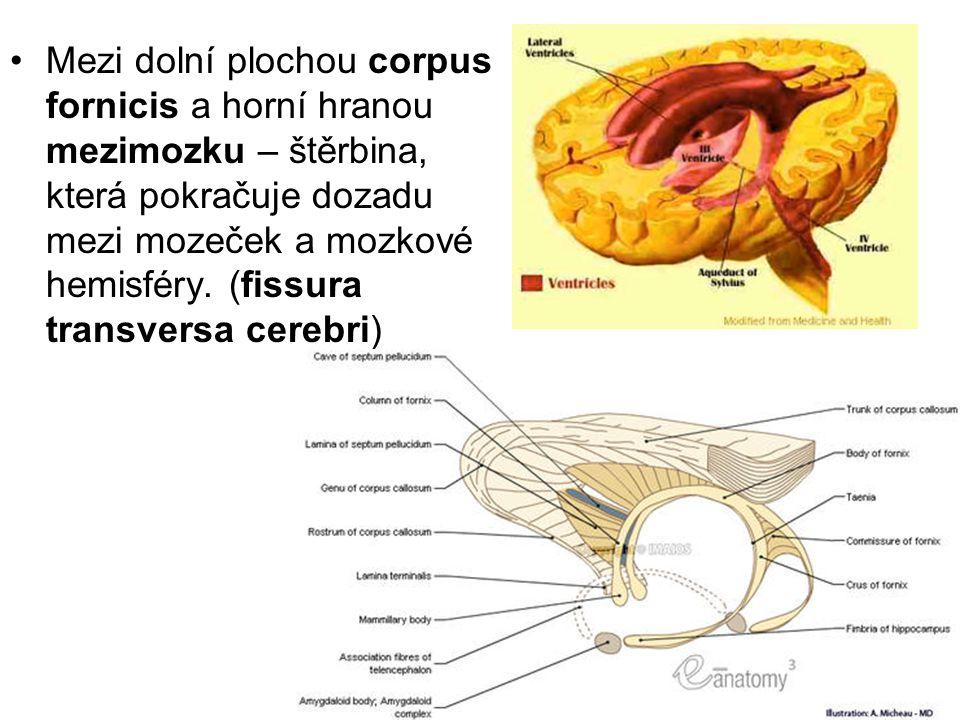 Mezi dolní plochou corpus fornicis a horní hranou mezimozku – štěrbina, která pokračuje dozadu mezi mozeček a mozkové hemisféry. (fissura transversa c