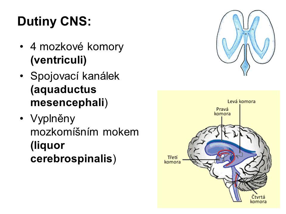 Dutiny CNS: 4 mozkové komory (ventriculi) Spojovací kanálek (aquaductus mesencephali) Vyplněny mozkomíšním mokem (liquor cerebrospinalis)