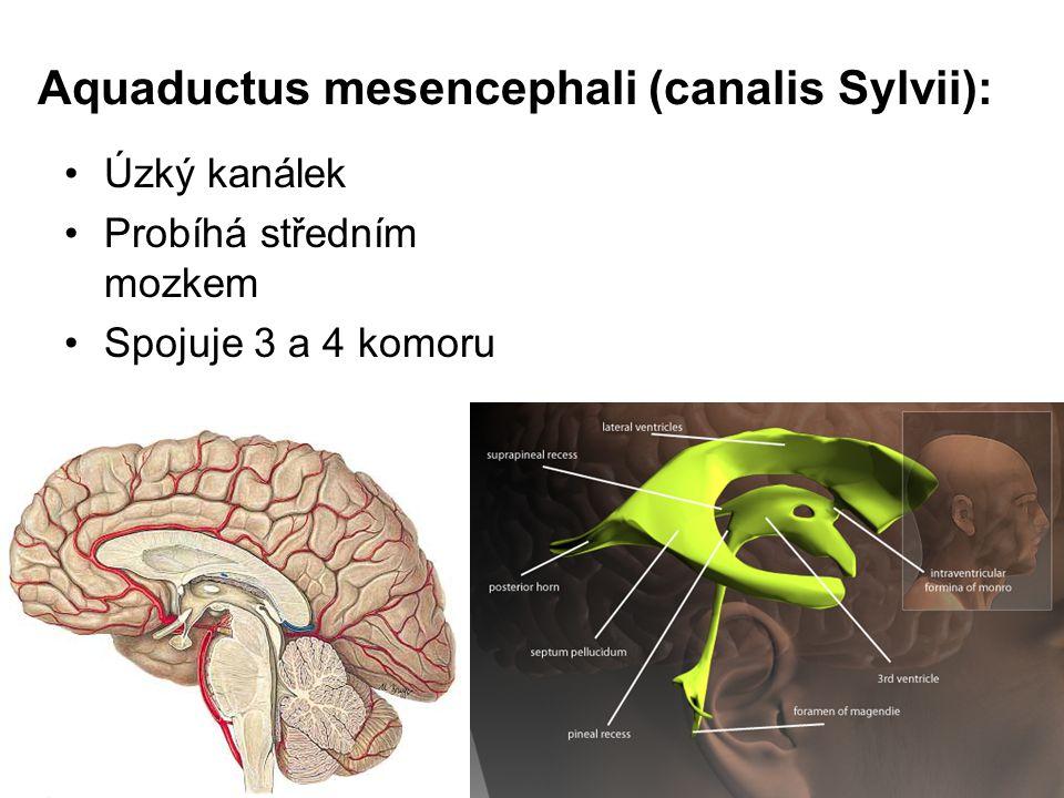 Aquaductus mesencephali (canalis Sylvii): Úzký kanálek Probíhá středním mozkem Spojuje 3 a 4 komoru