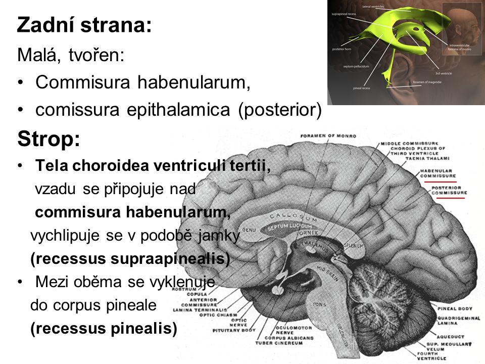Zadní strana: Malá, tvořen: Commisura habenularum, comissura epithalamica (posterior) Strop: Tela choroidea ventriculi tertii, vzadu se připojuje nad