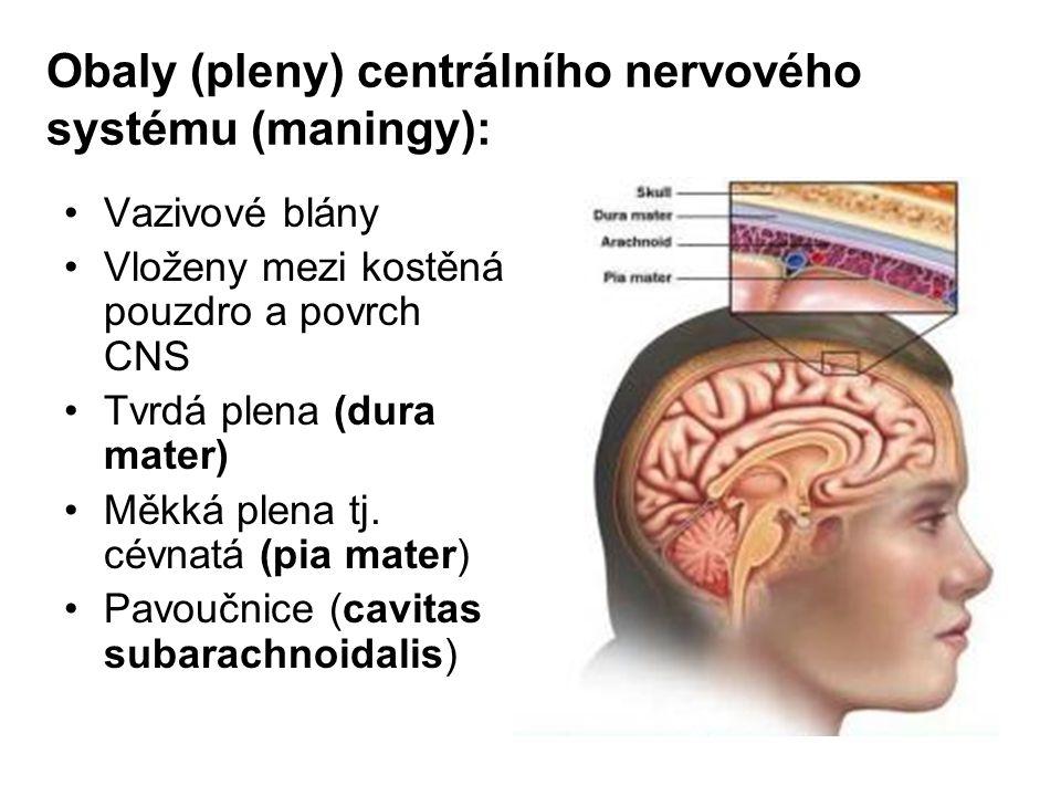 Obaly (pleny) centrálního nervového systému (maningy): Vazivové blány Vloženy mezi kostěná pouzdro a povrch CNS Tvrdá plena (dura mater) Měkká plena t