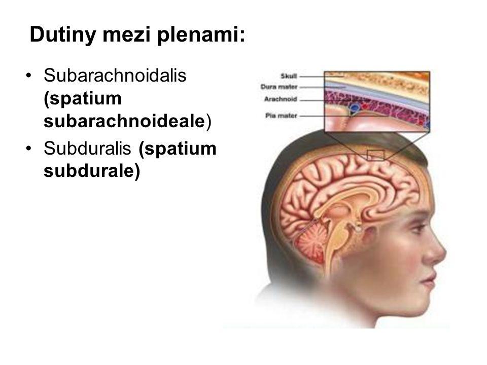 Dutiny mezi plenami: Subarachnoidalis (spatium subarachnoideale) Subduralis (spatium subdurale)