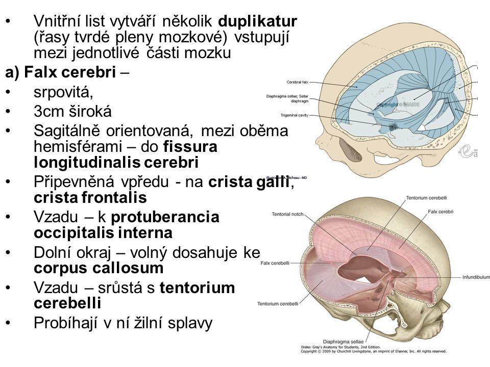 Vnitřní list vytváří několik duplikatur (řasy tvrdé pleny mozkové) vstupují mezi jednotlivé části mozku a) Falx cerebri – srpovitá, 3cm široká Sagitál