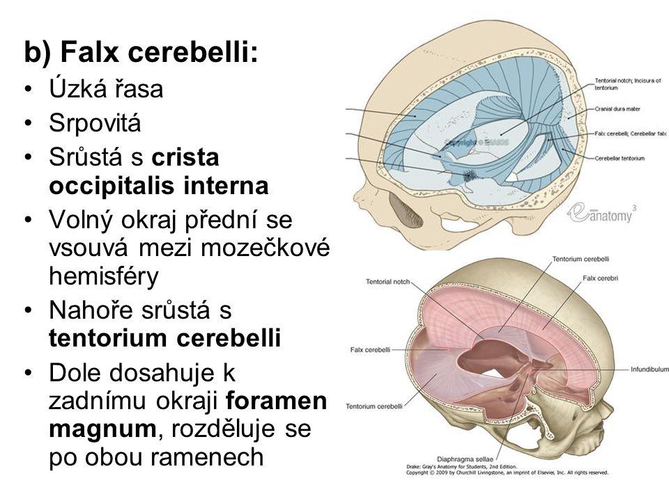 b) Falx cerebelli: Úzká řasa Srpovitá Srůstá s crista occipitalis interna Volný okraj přední se vsouvá mezi mozečkové hemisféry Nahoře srůstá s tentor