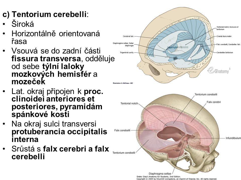 c) Tentorium cerebelli: Široká Horizontálně orientovaná řasa Vsouvá se do zadní části fissura transversa, odděluje od sebe týlní laloky mozkových hemi