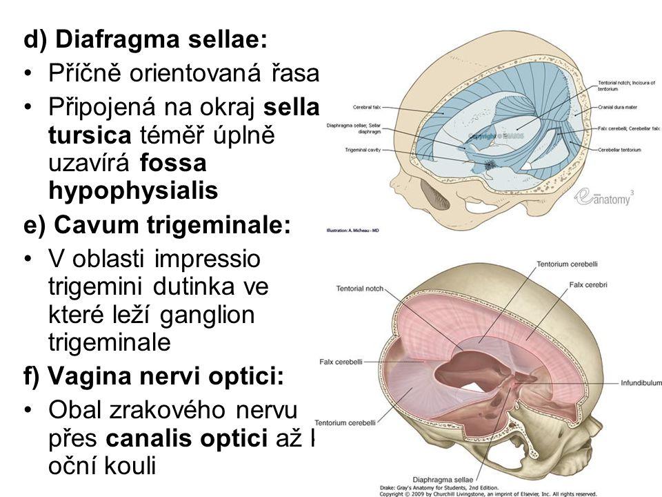 d) Diafragma sellae: Příčně orientovaná řasa Připojená na okraj sella tursica téměř úplně uzavírá fossa hypophysialis e) Cavum trigeminale: V oblasti