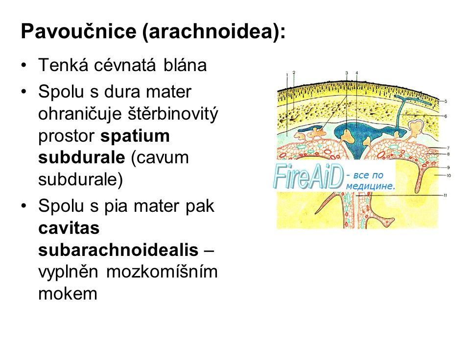 Pavoučnice (arachnoidea): Tenká cévnatá blána Spolu s dura mater ohraničuje štěrbinovitý prostor spatium subdurale (cavum subdurale) Spolu s pia mater