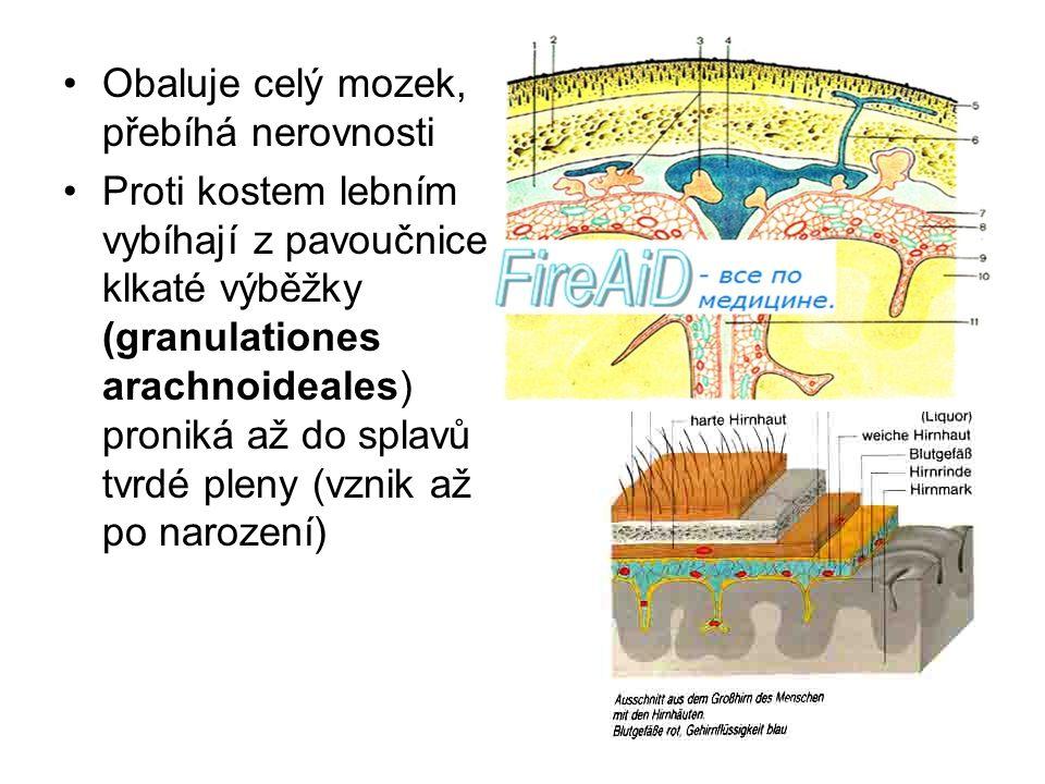 Obaluje celý mozek, přebíhá nerovnosti Proti kostem lebním vybíhají z pavoučnice klkaté výběžky (granulationes arachnoideales) proniká až do splavů tv