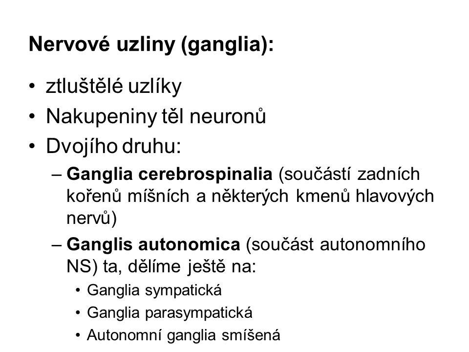 Nervové uzliny (ganglia): ztluštělé uzlíky Nakupeniny těl neuronů Dvojího druhu: –Ganglia cerebrospinalia (součástí zadních kořenů míšních a některých