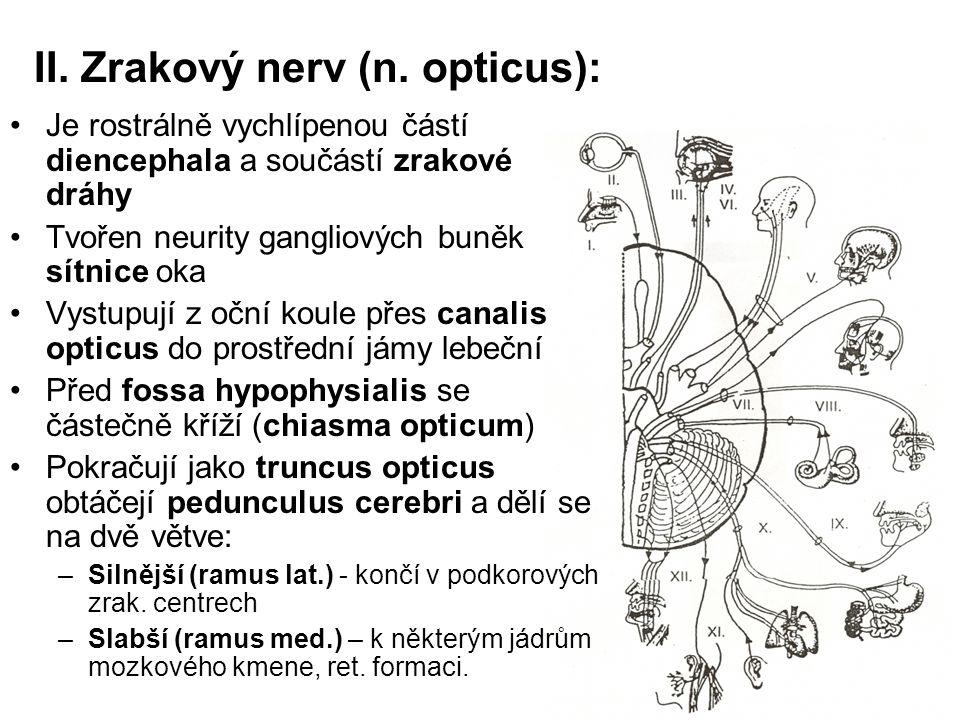 II. Zrakový nerv (n. opticus): Je rostrálně vychlípenou částí diencephala a součástí zrakové dráhy Tvořen neurity gangliových buněk sítnice oka Vystup