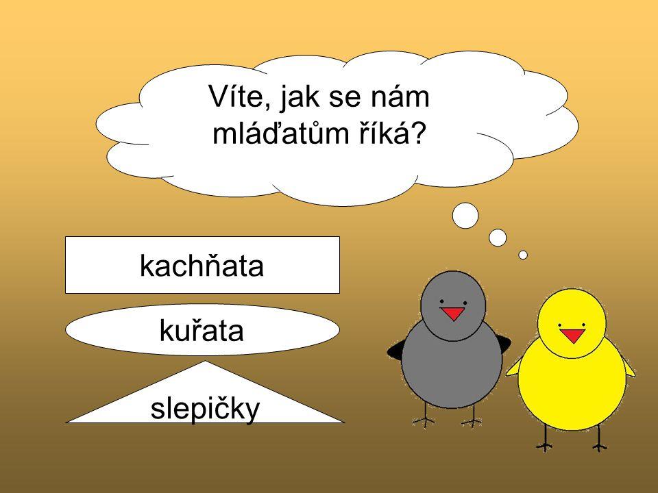 Víte, jak se nám mláďatům říká? kachňata kuřata slepičky
