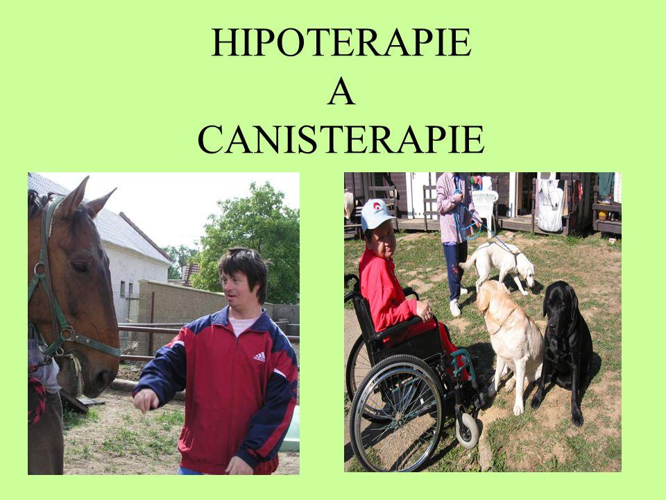 HIPOTERAPIE A CANISTERAPIE