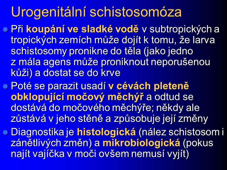 Urogenitální schistosomóza Při koupání ve sladké vodě v subtropických a tropických zemích může dojít k tomu, že larva schistosomy pronikne do těla (ja