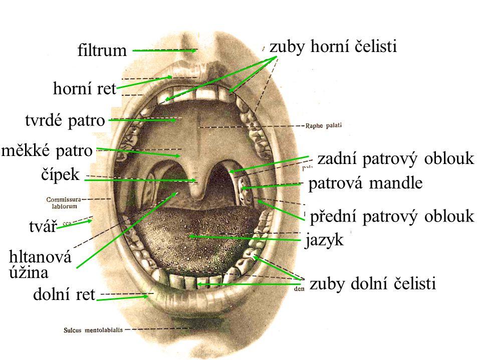 měkké patro tvrdé patro tvář jazyk patrová mandle horní ret čípek zuby horní čelisti filtrum zadní patrový oblouk přední patrový oblouk dolní ret zuby dolní čelisti hltanová úžina