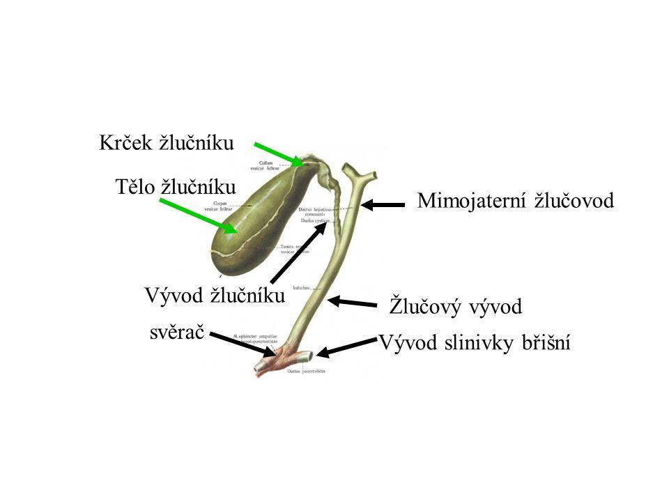 Žlučový vývod Mimojaterní žlučovod Vývod žlučníku Tělo žlučníku Krček žlučníku Vývod slinivky břišní svěrač