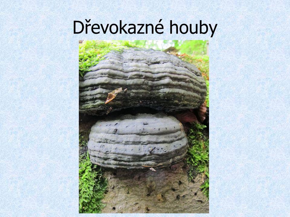 Dřevokazné houby