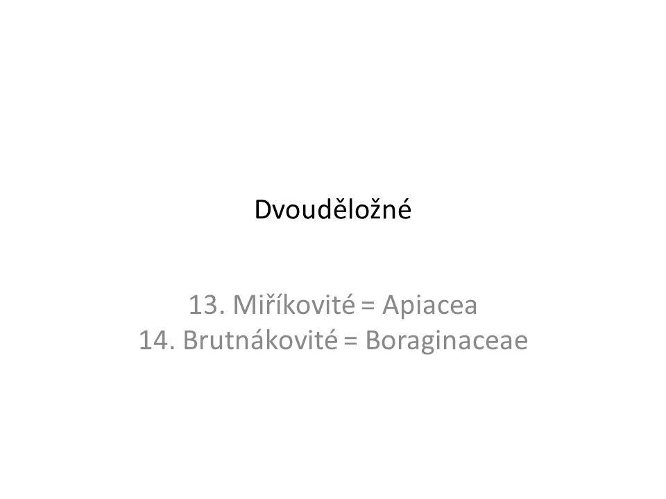 Dvouděložné 13. Miříkovité = Apiacea 14. Brutnákovité = Boraginaceae