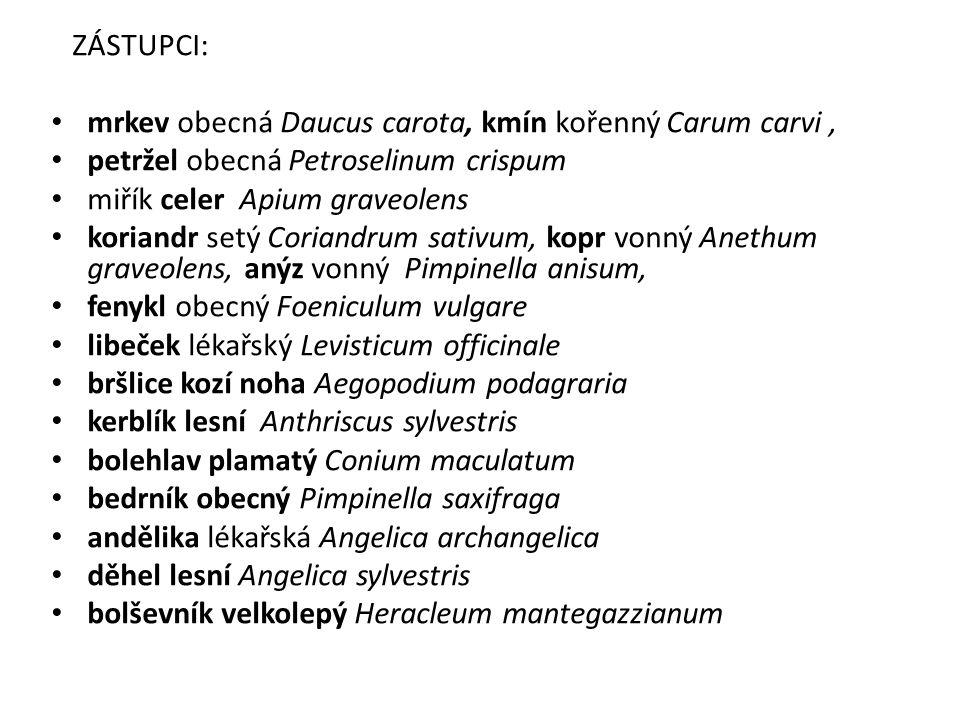 ZÁSTUPCI: mrkev obecná Daucus carota, kmín kořenný Carum carvi, petržel obecná Petroselinum crispum miřík celer Apium graveolens koriandr setý Coriandrum sativum, kopr vonný Anethum graveolens, anýz vonný Pimpinella anisum, fenykl obecný Foeniculum vulgare libeček lékařský Levisticum officinale bršlice kozí noha Aegopodium podagraria kerblík lesní Anthriscus sylvestris bolehlav plamatý Conium maculatum bedrník obecný Pimpinella saxifraga andělika lékařská Angelica archangelica děhel lesní Angelica sylvestris bolševník velkolepý Heracleum mantegazzianum