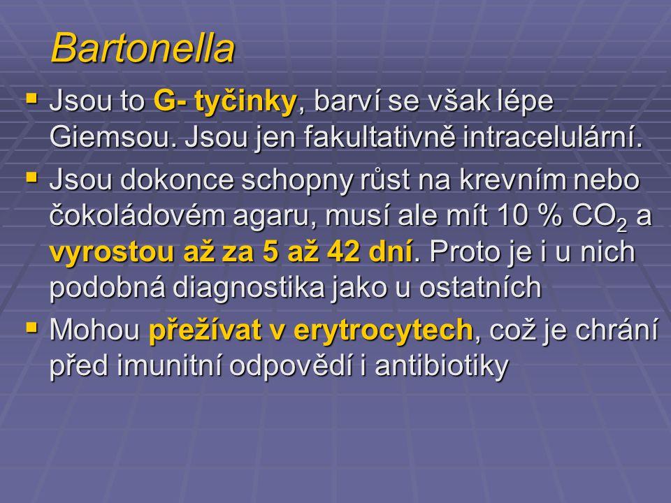 Bartonella  Jsou to G- tyčinky, barví se však lépe Giemsou. Jsou jen fakultativně intracelulární.  Jsou dokonce schopny růst na krevním nebo čokolád