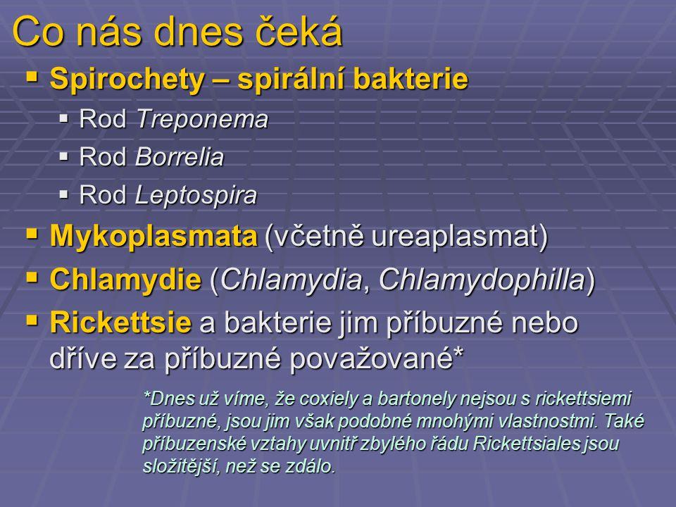Co nás dnes čeká  Spirochety – spirální bakterie  Rod Treponema  Rod Borrelia  Rod Leptospira  Mykoplasmata (včetně ureaplasmat)  Chlamydie (Chlamydia, Chlamydophilla)  Rickettsie a bakterie jim příbuzné nebo dříve za příbuzné považované* *Dnes už víme, že coxiely a bartonely nejsou s rickettsiemi příbuzné, jsou jim však podobné mnohými vlastnostmi.
