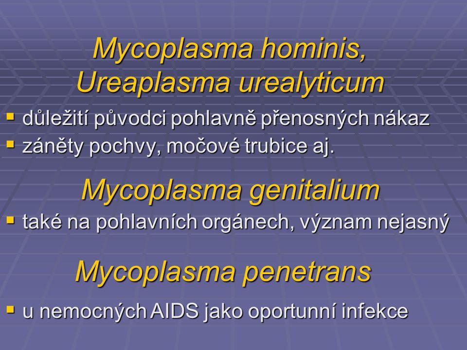 Mycoplasma hominis, Ureaplasma urealyticum  důležití původci pohlavně přenosných nákaz  záněty pochvy, močové trubice aj.  také na pohlavních orgán