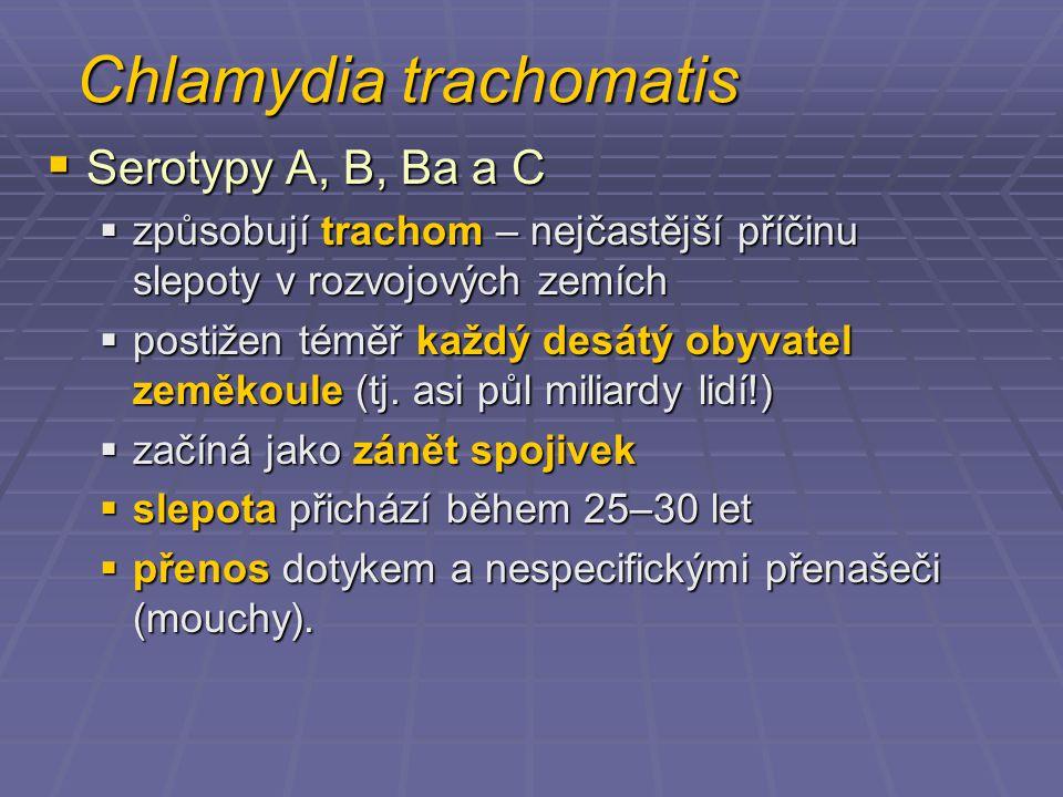 Chlamydia trachomatis  Serotypy A, B, Ba a C  způsobují trachom – nejčastější příčinu slepoty v rozvojových zemích  postižen téměř každý desátý oby