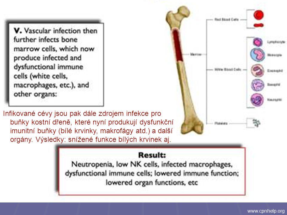 www.cpnhelp.org Infikované cévy jsou pak dále zdrojem infekce pro buňky kostní dřeně, které nyní produkují dysfunkční imunitní buňky (bílé krvinky, ma