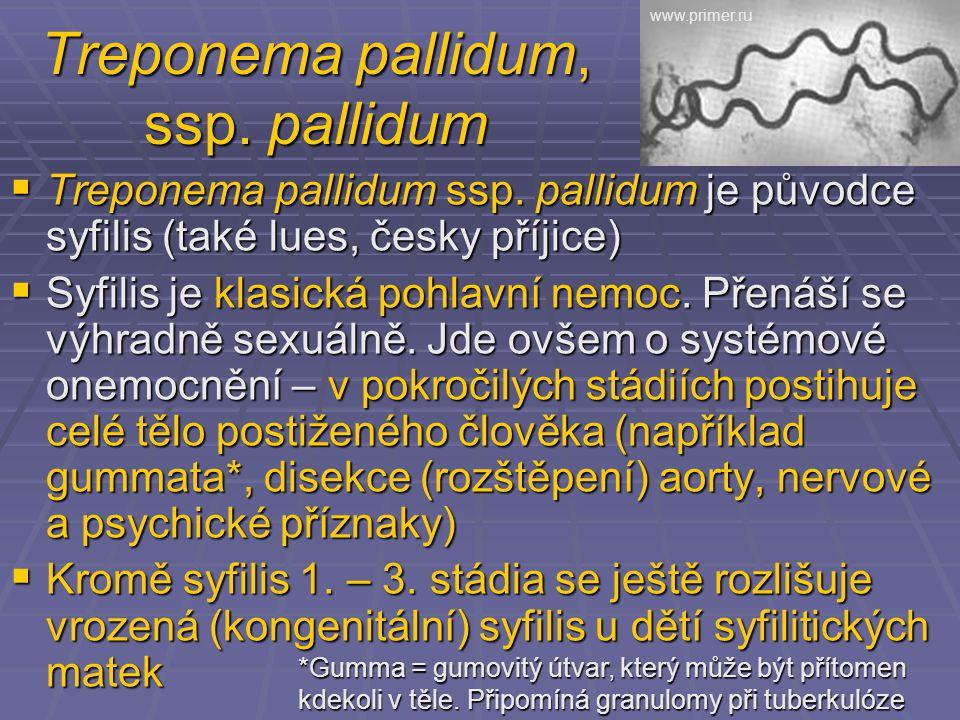 Treponema pallidum, ssp. pallidum  Treponema pallidum ssp. pallidum je původce syfilis (také lues, česky příjice)  Syfilis je klasická pohlavní nemo