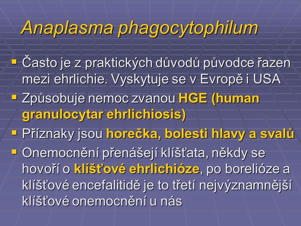 Anaplasma phagocytophilum  Často je z praktických důvodů původce řazen mezi ehrlichie.