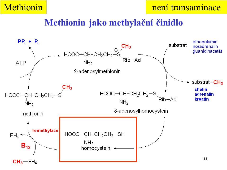 11 Methionin jako methylační činidlo B 12 Methionin ethanolamin noradrenalin guanidinacetát není transaminace