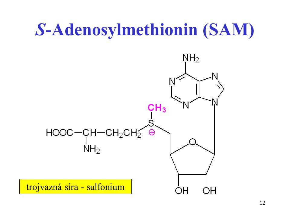 12 S-Adenosylmethionin (SAM) trojvazná síra - sulfonium