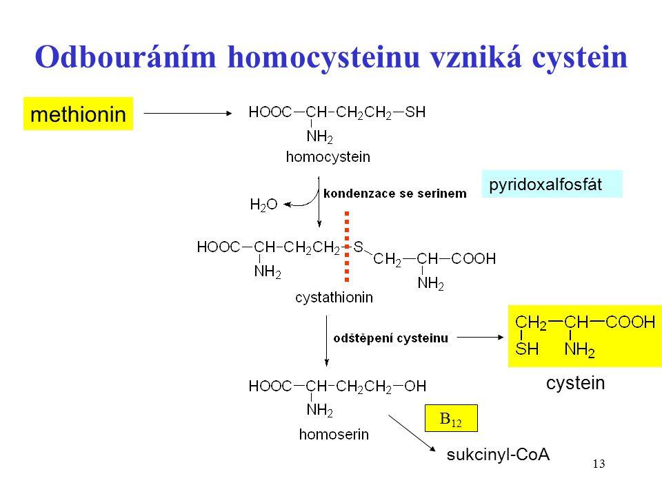 13 Odbouráním homocysteinu vzniká cystein methionin pyridoxalfosfát cystein sukcinyl-CoA B 12