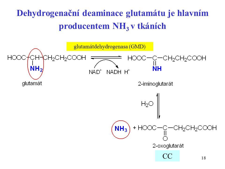 18 Dehydrogenační deaminace glutamátu je hlavním producentem NH 3 v tkáních glutamátdehydrogenasa (GMD) CC