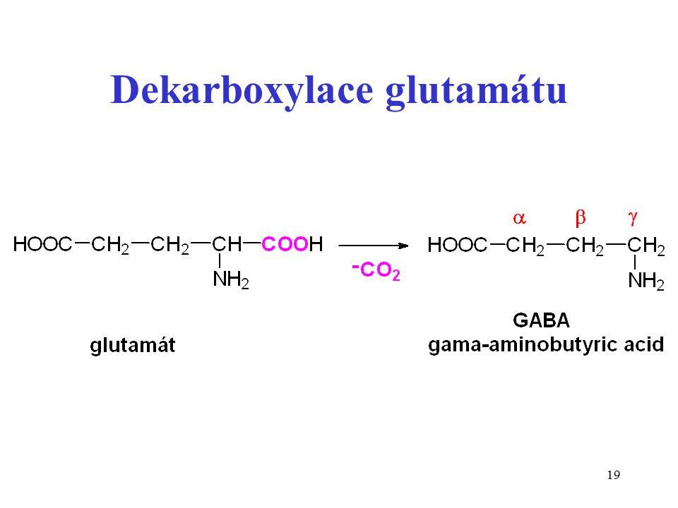 19 Dekarboxylace glutamátu