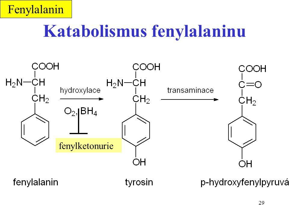 29 Katabolismus fenylalaninu Fenylalanin fenylketonurie