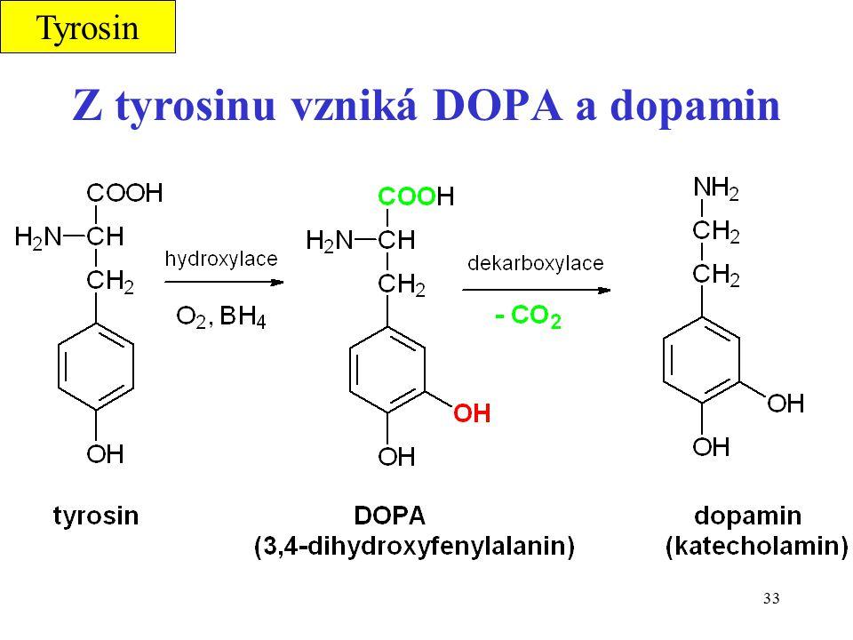 33 Z tyrosinu vzniká DOPA a dopamin Tyrosin