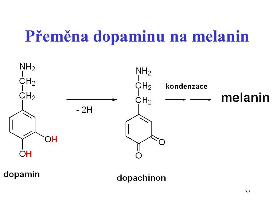35 Přeměna dopaminu na melanin