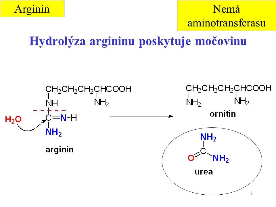 7 Hydrolýza argininu poskytuje močovinu ArgininNemá aminotransferasu